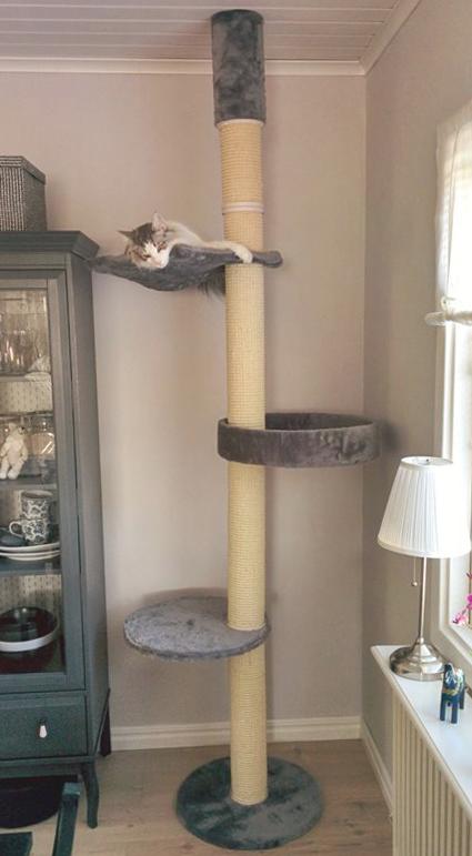 klostrad-katten-no-1